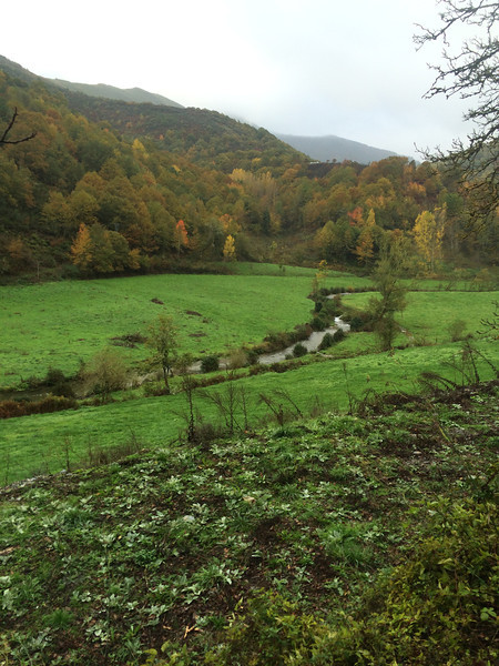Galician countryside - green and damp!