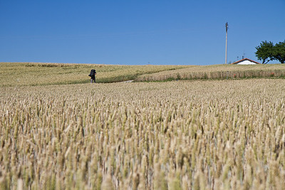 Golden wheat along the Meseta.