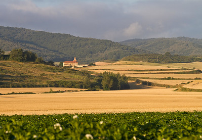 Golden wheat and greenery on the Camino de Santiago after Santo Domingo de la Calzada.