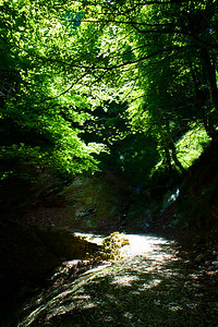 A green forest scene along the Camino de Santiago Varcarlos route between Varcarlos and Roncesvalles.