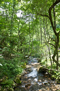 Flowing forest brook along the Camino de Santiago Varcarlos route between Varcarlos and Roncesvalles.