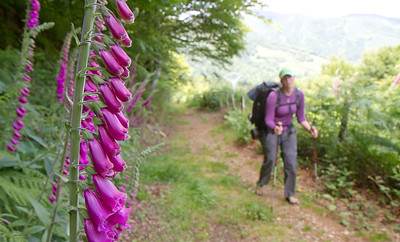 Anna Dintaman, author of Hiking the Camino, passes by purple hollyhocks on her way to Roncesvalles on the Valcarlos route of the Camino de Santiago.