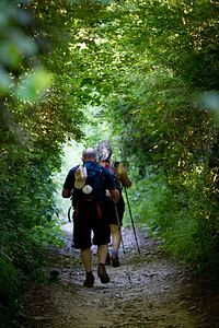 A green tunnel of foliage on the way to Larrasoaña provides pleasant forest walking for pilgrims on the Camino de Santiago.