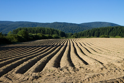 The Camino de Santiago passes through agricultural fields on leisurely earthen paths.