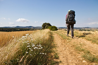 Author Anna Dintaman walks along fields of wheat in Navarra on the Camino de Santiago.