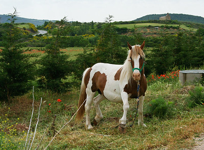 A horse waiting along the Camino de Santiago in the Navarran countryside.