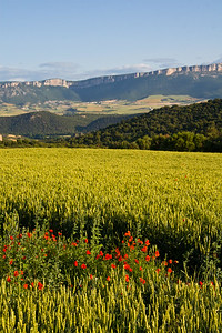 Red poppies, green fields and distant mountains make for beautiful scenery between Estella and Villamayor de Monjardín.