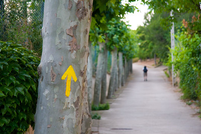 The path leaves Los Arcos along a very straight row of trees.