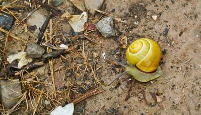 A colorful snail along the Camino de Santiago.