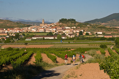 Pilgrims walk through green vineyards as they approach Navarrete village.