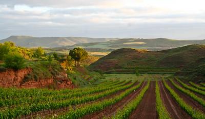 La Rioja vineyards between Nájera and Azofra.