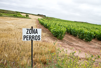 """Zona Perros"" in the vineyards after Azofra."