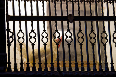 Live chickens are kept in the cathedral of Santo Domingo de la Calzada, said to be the descendants of roasted chickens which were resurrected in a medieval myth.