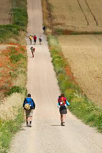 The long, straight path to Santo Domingo de la Calzada from Cirueña.