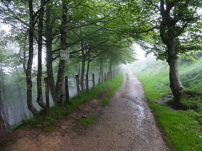 A misty path through the trees on the first day of the Camino de Santiago, approaching the summit of the Pyrenees pass at Col de Lepoeder.
