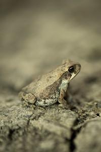 Dennis Stewart - Small Toad.jpg