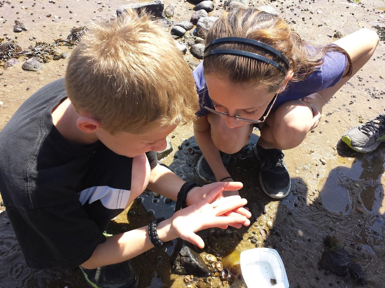 looking at shells