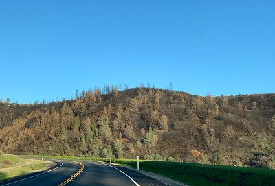 View of the trees after fire
