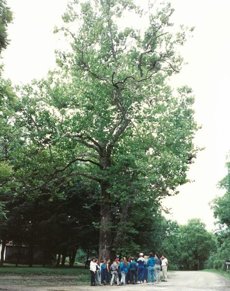 Wilderness Camp 1991-2