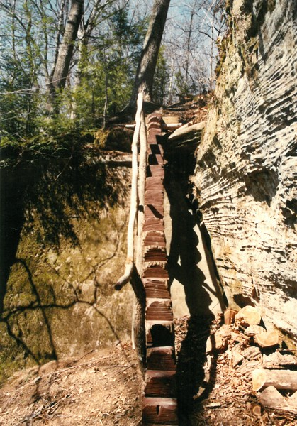 Stairway made from fallen tree  Below Base Camp to undercut  4 3 1991