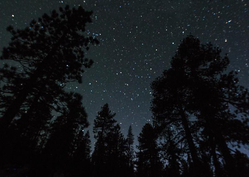 Yosemite starlit ponderosas _KTK5080