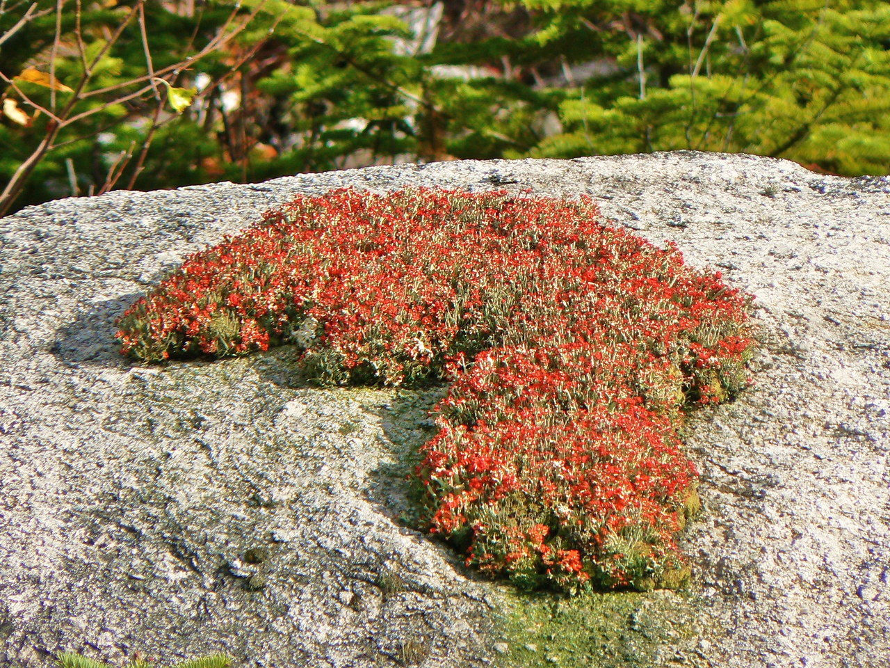 Some very pretty lichen on a boulder next to the road