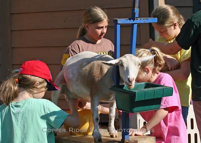 Copper Ridge Farm Day Camp 2008