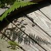 I'm being followed by a fern shadow...