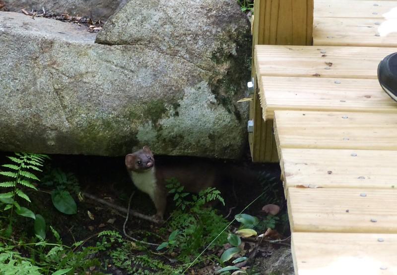 Weasel!!!