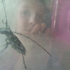 Peek-a-beetle!