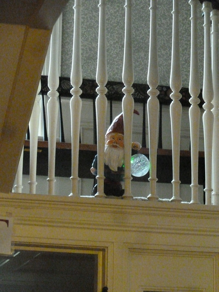 Real Gnome sighting!