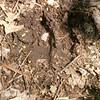 Oh, deer...tracks!