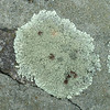 Some nice look'n lichen.