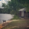 Belle (camp dog) is wondering when the docks will go in the water....