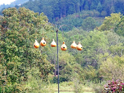 Bird houses made out of gourds
