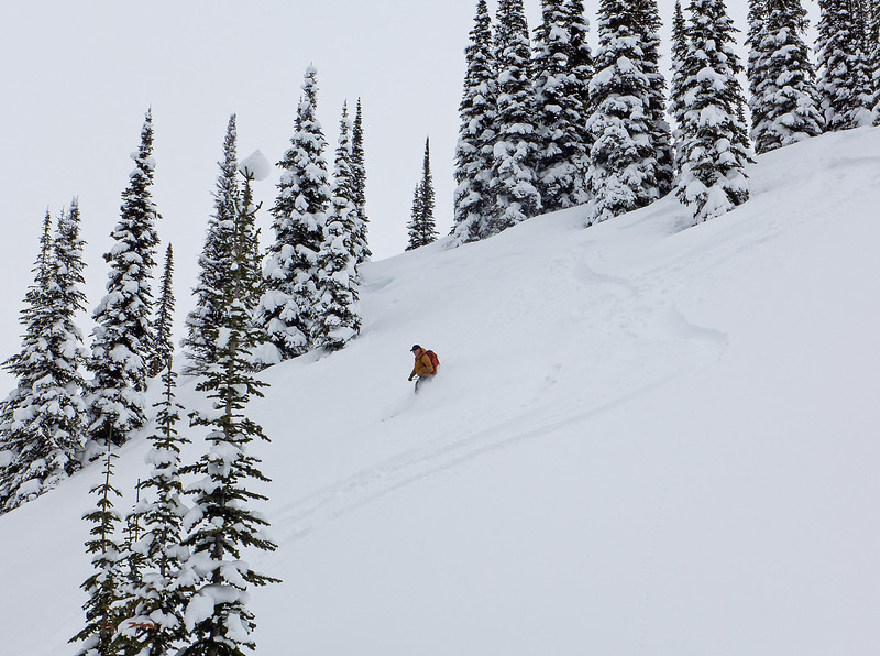 Excellent tree skiing conditions.