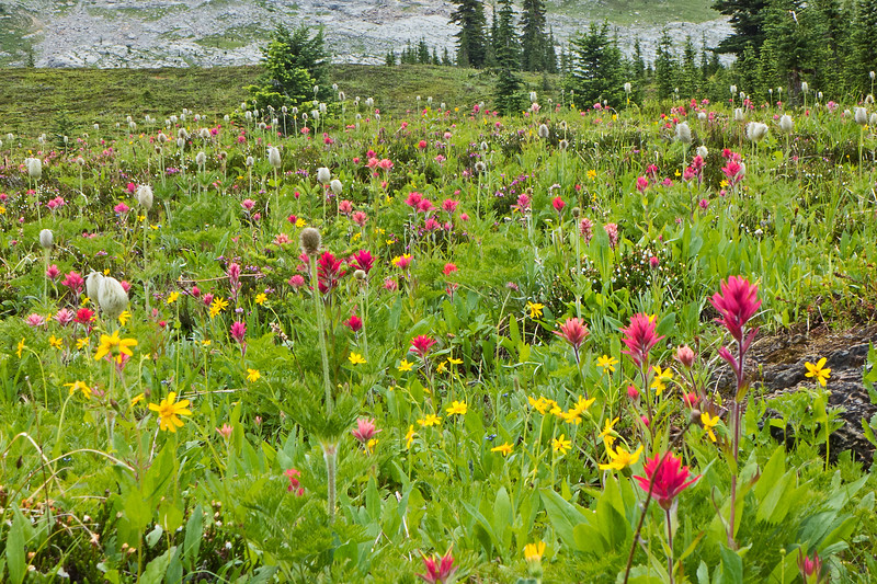 Lush flower meadows,  along the line of the usual ski track home from the tree skiing zone, on a damp day spent getting the hydro-electric system up and running.