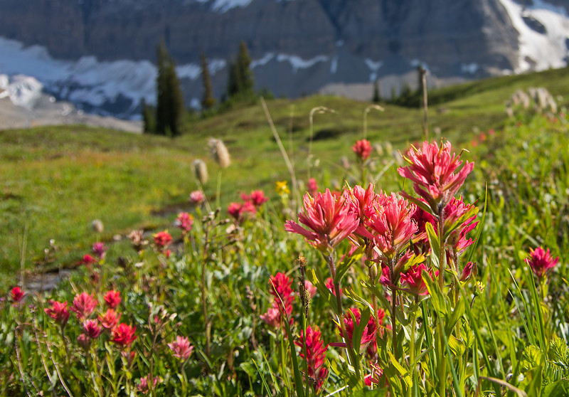 Paintbrush meadows, along the route to check out the water intake below the Paradise runs.
