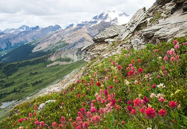 Paintbrush pocket along the traverse onto Diamond Ridge.
