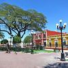 Large Carob Trees Shade The Plaza