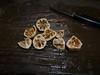 023 Lk Winfield Scott-black walnuts eaten P1020045-a
