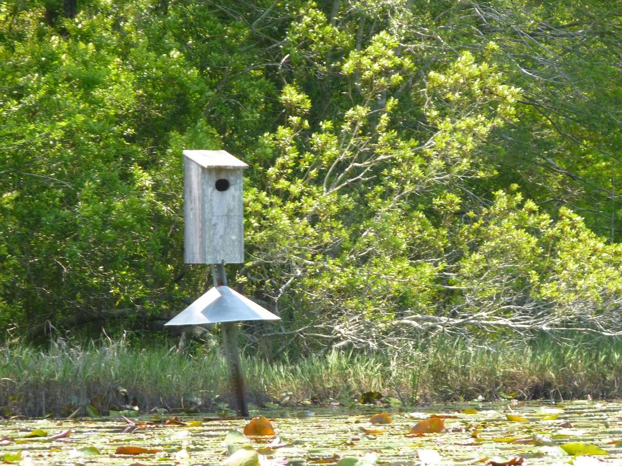day 2 16 bird nesting box P1020748-a-C
