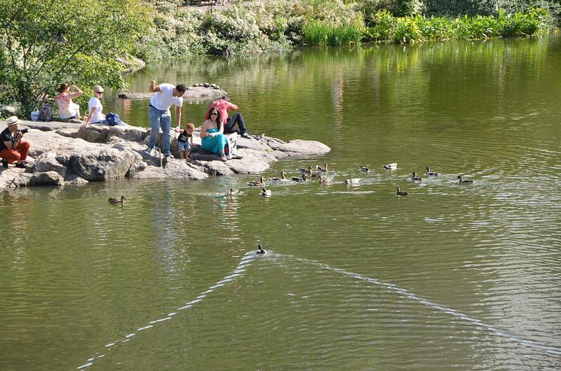 Feeding the ducks. Zoom....