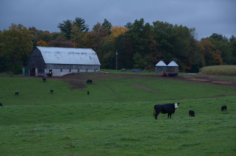 This was the view out the back door of the camper this night. Bob Evans, country home cooking, would be proud...