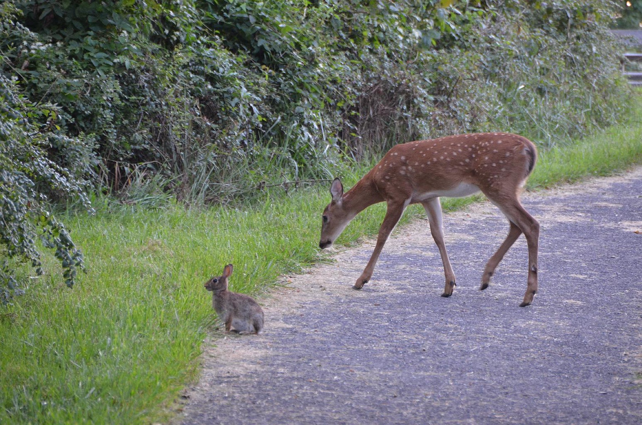 4931 – Every campsite in the campground was assigned a bunny rabbit and a deer. These were ours.