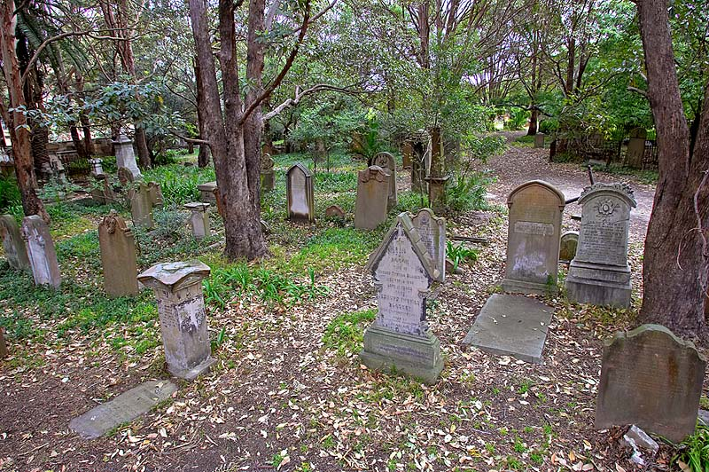 Camperdown Cemetery stands in a remnant of an Ironbark & Turpentine forest that once covered much of Sydney's inner west.