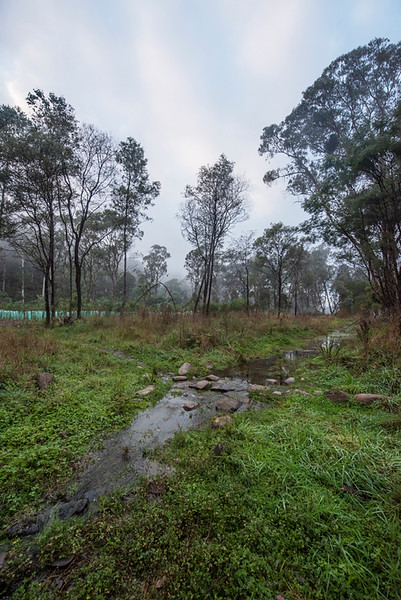 Another misty morning shot taken across a swampy area next to the campground on the way to the Ovens River