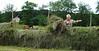 Hesjing på Rotvoll3