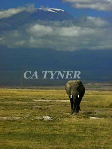 Elephant  Amboseli National Park Kenya Africa 4