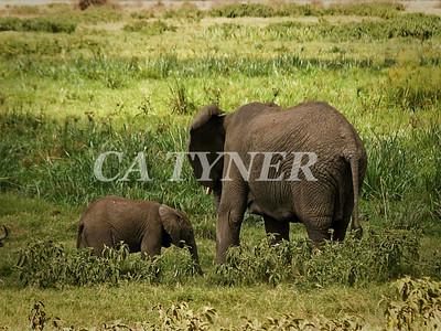 Momma And Baby  Amboseli National Park Kenya Africa